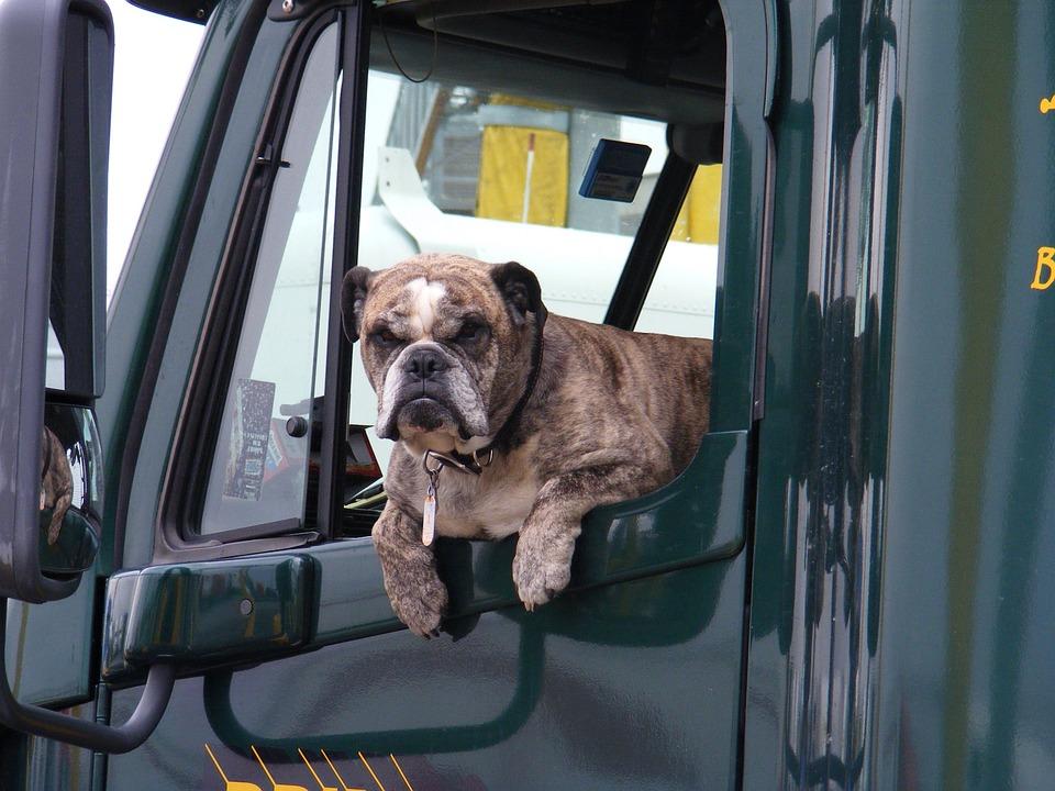Trucker's Dog
