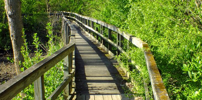 Walking Trail With Bridge